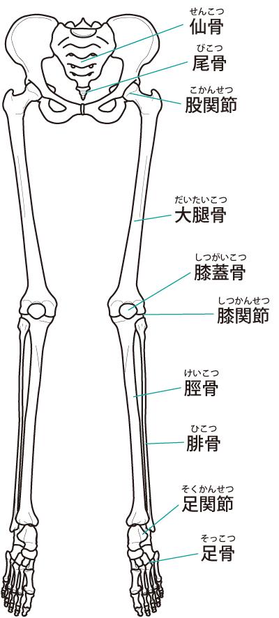 下肢 関節
