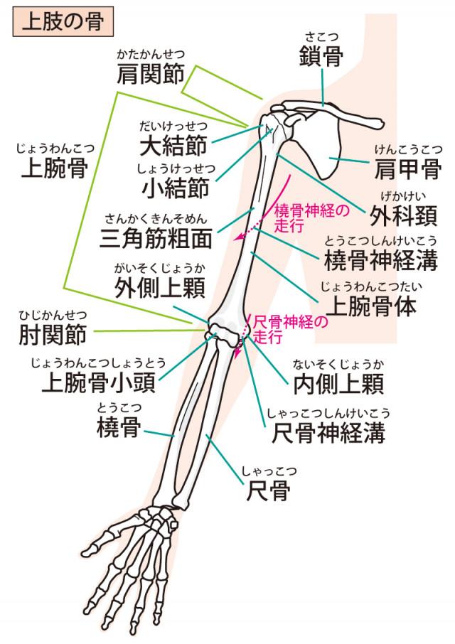 腱鞘炎へのアプローチは?